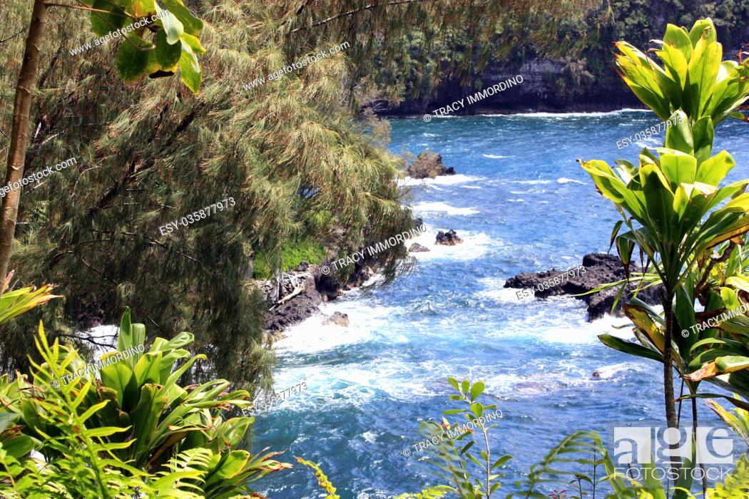 Stock Photo: Peeking through pine and yucca trees and ferns to the Pacific Ocean at Onomea Bay in Papaikou, Hawaii.