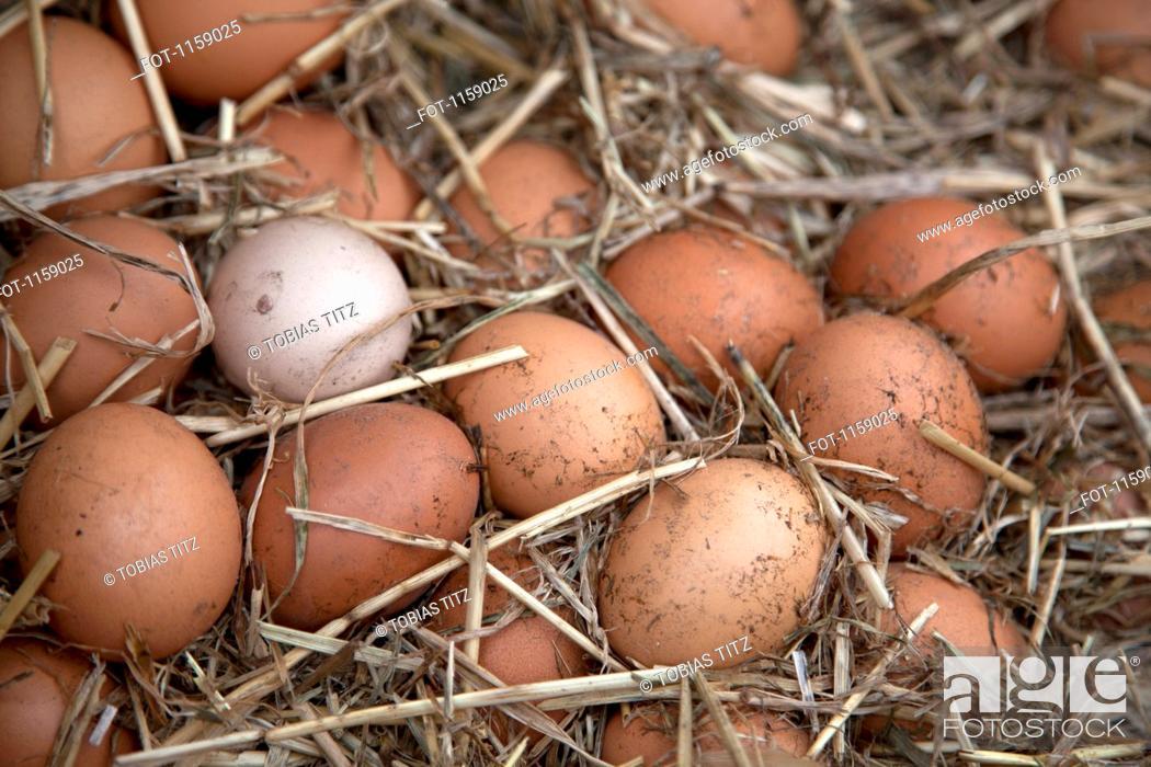 Stock Photo: Collection of fresh farm eggs.