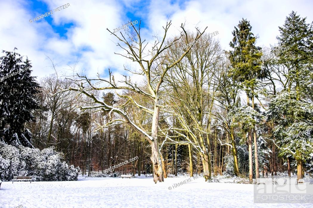Stock Photo: Dutch winter landscape with snow, The Netherlands, Europe.