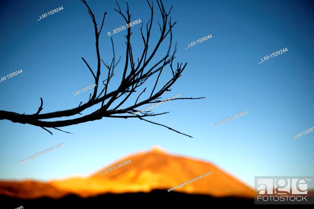 Stock Photo: Parque Nacional del Teide, Tenerife, Canary Islands, Spain.