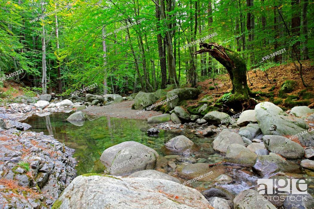Stock Photo: Dense forest with small river im Ravin d'Ajola near Vizzavona, Corsica, France, Europe.
