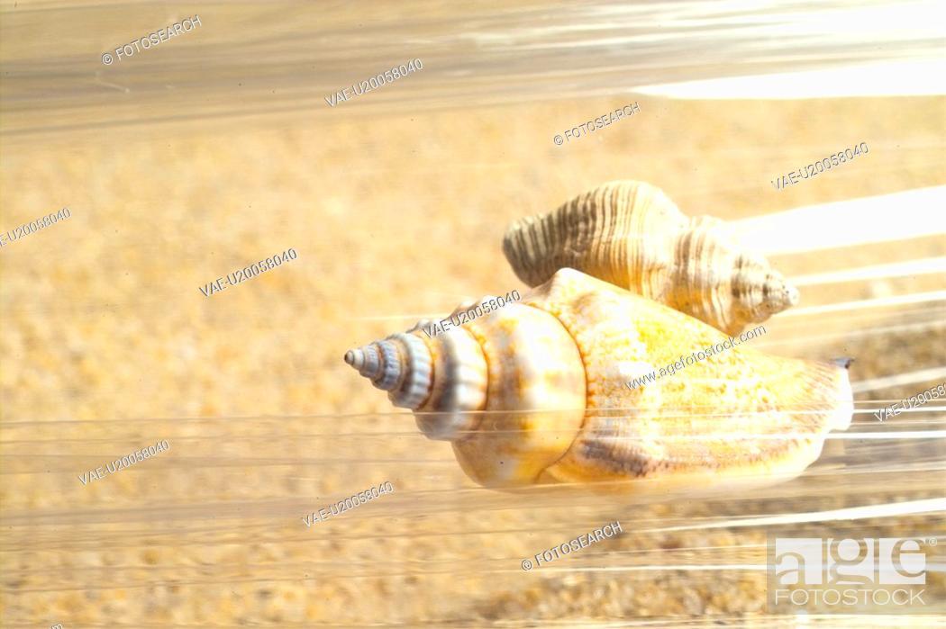 Stock Photo: mollucca, animal, mollusc, mollusks, mollusk, conch.