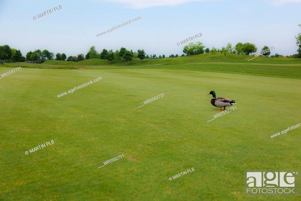 Imagen: golf course.