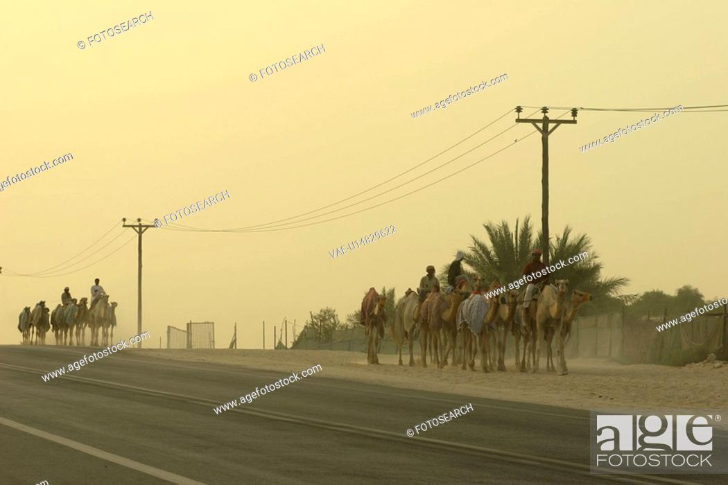 Stock Photo: road, camels, street, traditional, life, arabic.