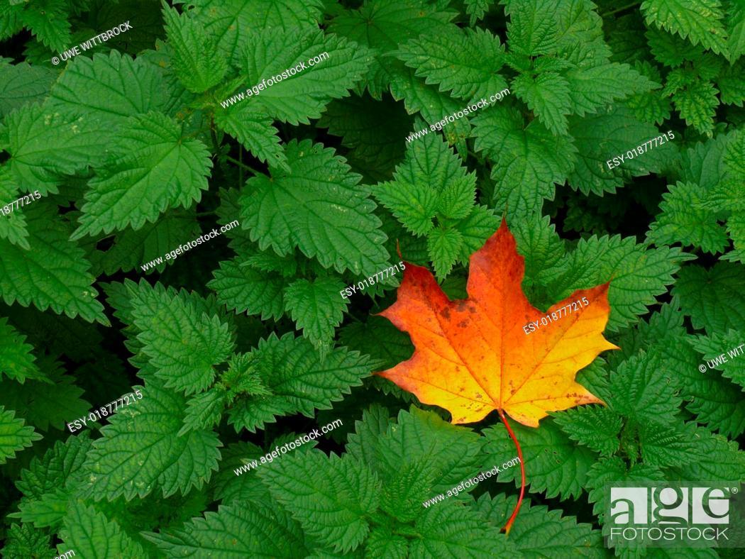 Photo de stock: Herbst.