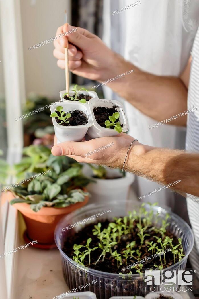 Stock Photo: Young man with plants at the window.