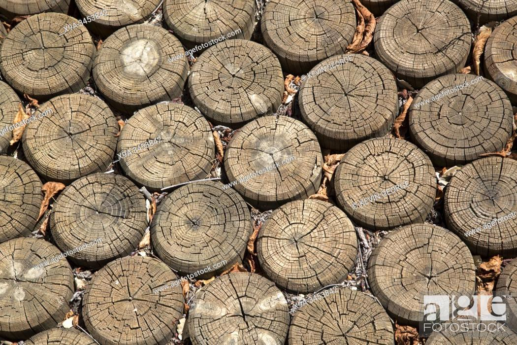 Stock Photo: Wooden Trunks forming Footpath, Background.