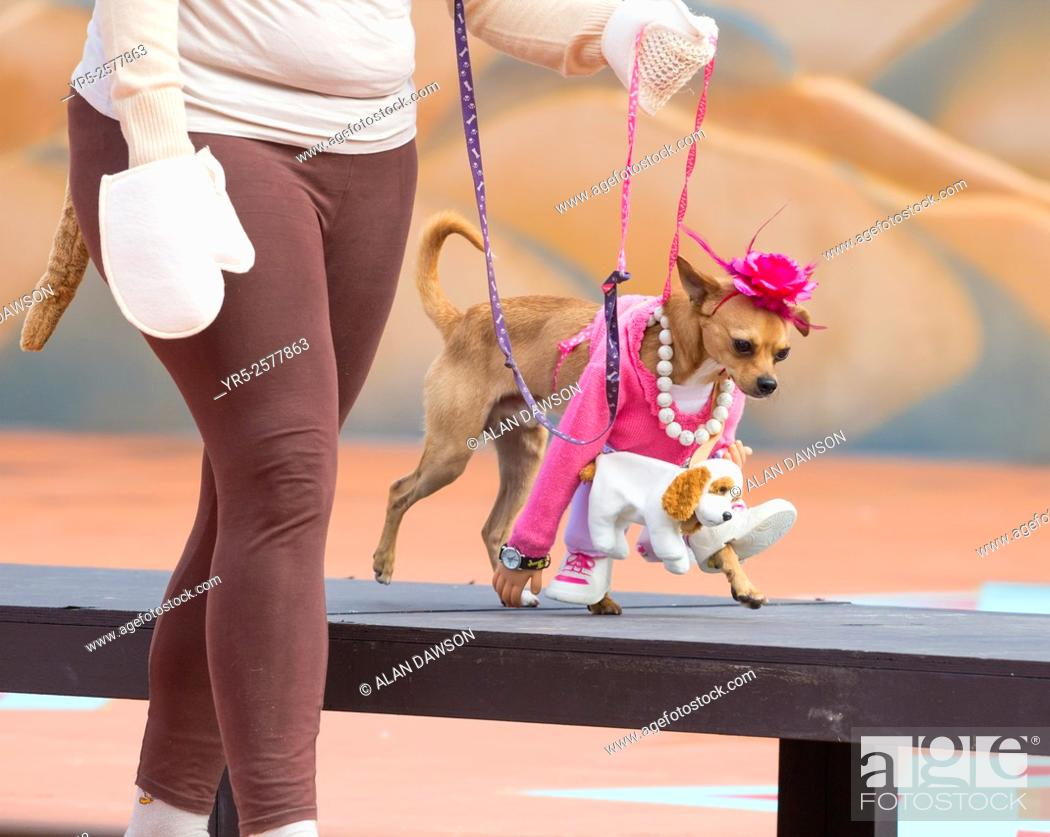 Stock Photo: Dog fancy dress day at Las Palmas Carnival on Gran Canaria, Canary Islands, Spain.