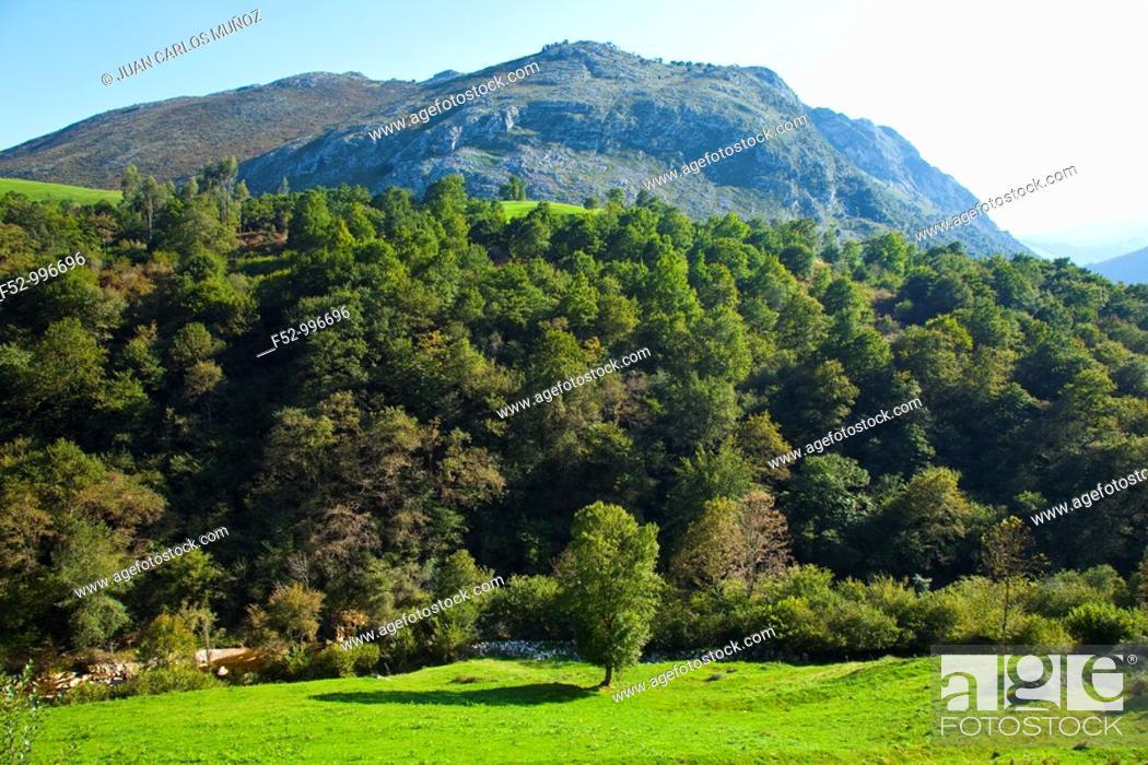 Stock Photo: Lamason river. Venta Fresnedo. Nansa Valley. Cantabria. Spain.