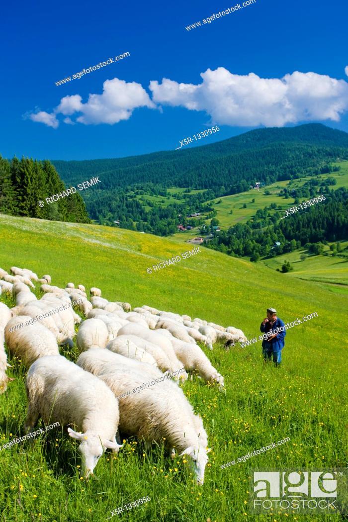 Stock Photo: sheep herd with herdsman, Mala Fatra, Slovakia.