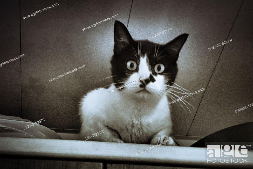 Stock Photo: Domestic cat looking at camera.