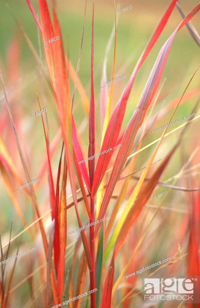 Stock Photo: Blades, of, grass, Switzerland.