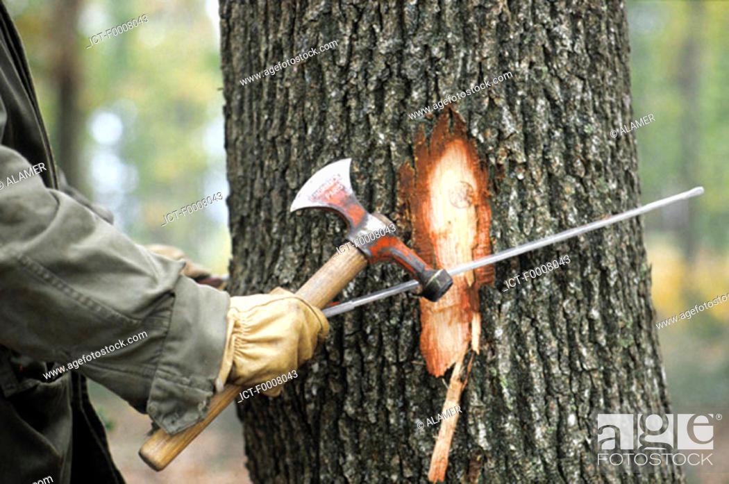 Stock Photo: Marking trees.