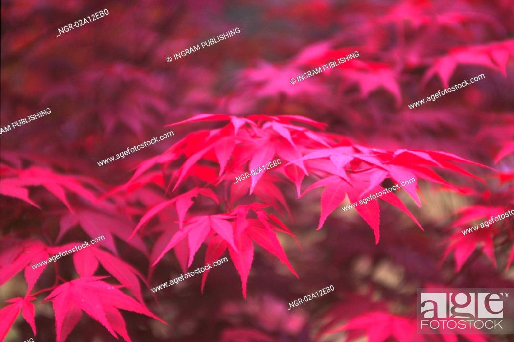 Stock Photo: Close-up of leaves on the branch of a tree.