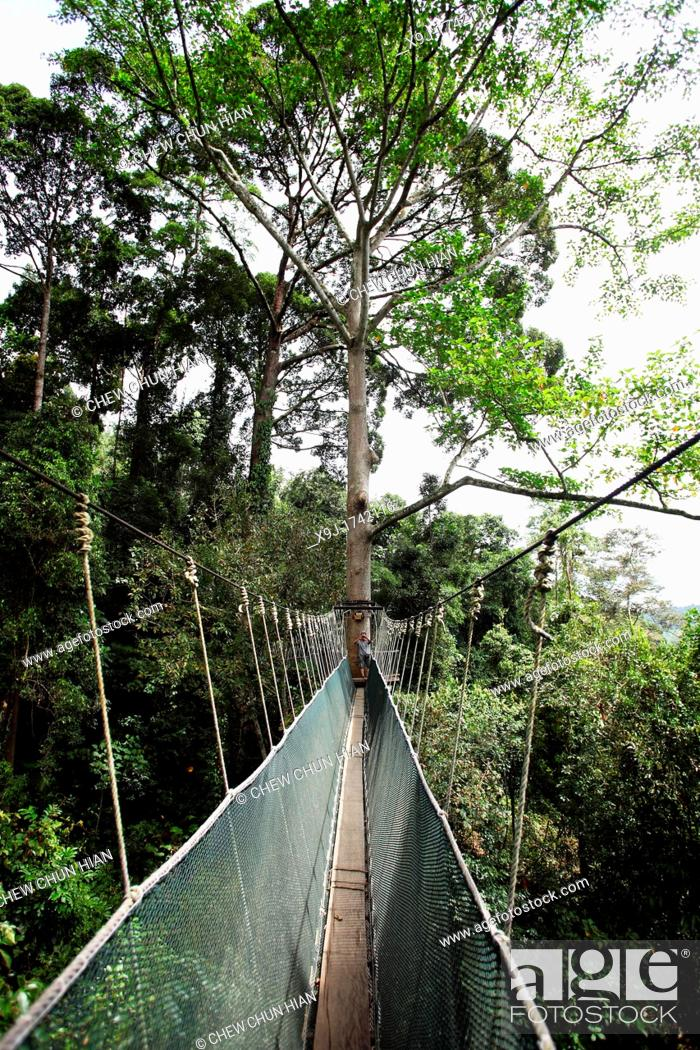 Stock Photo - Jungle canopy walk at Poring Hot Springs in Sabah Borneo Malaysia : canopy walk malaysia - afamca.org