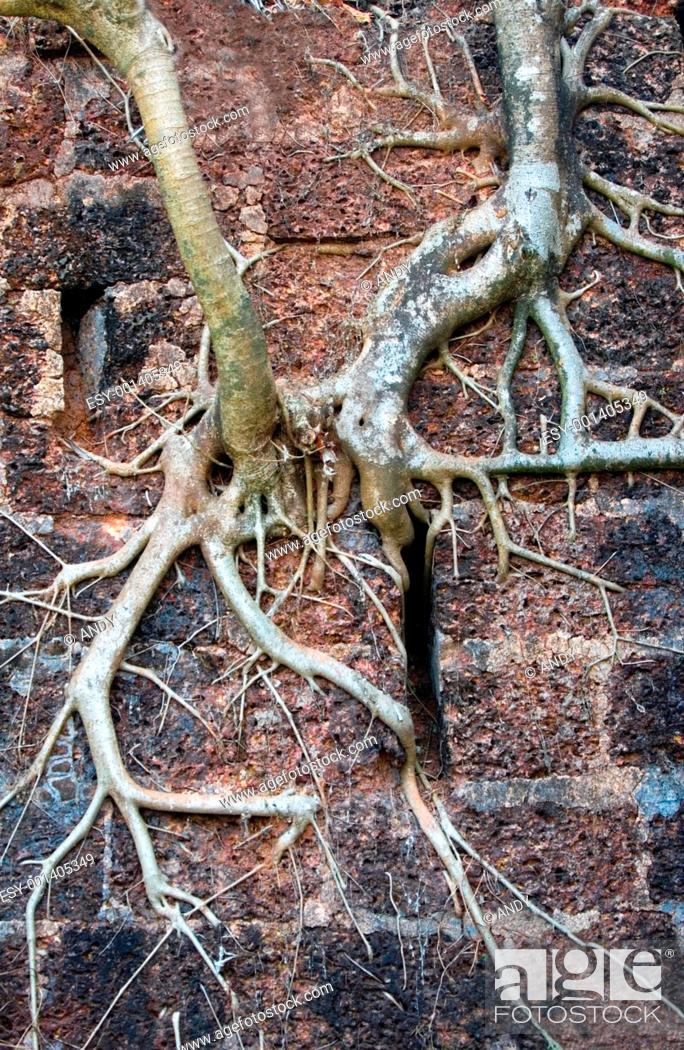Stock Photo: Roots.