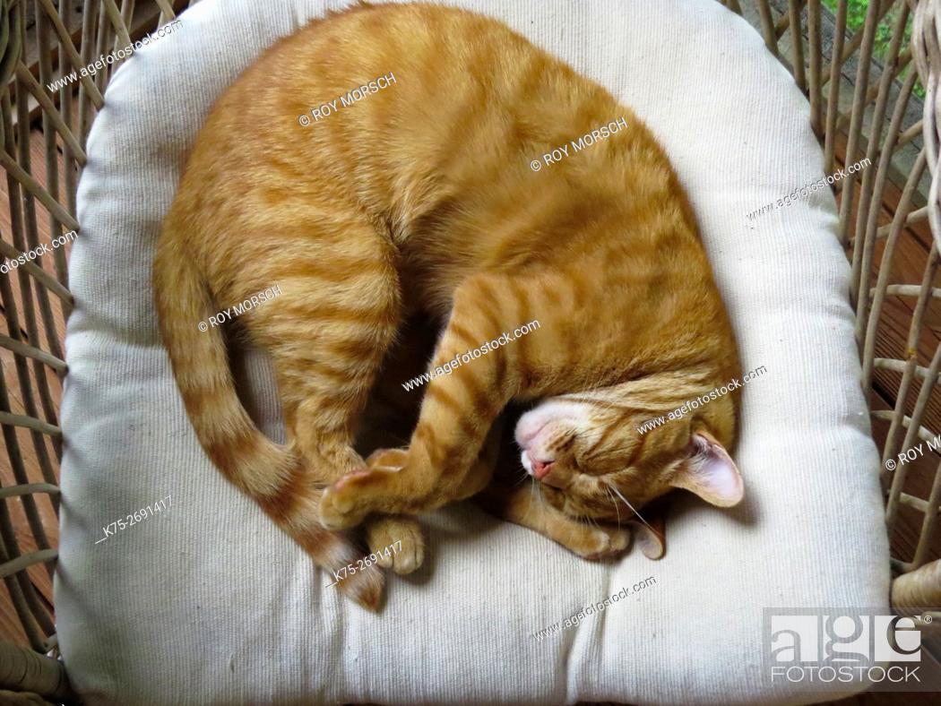 Stock Photo: Cat napping in chair.