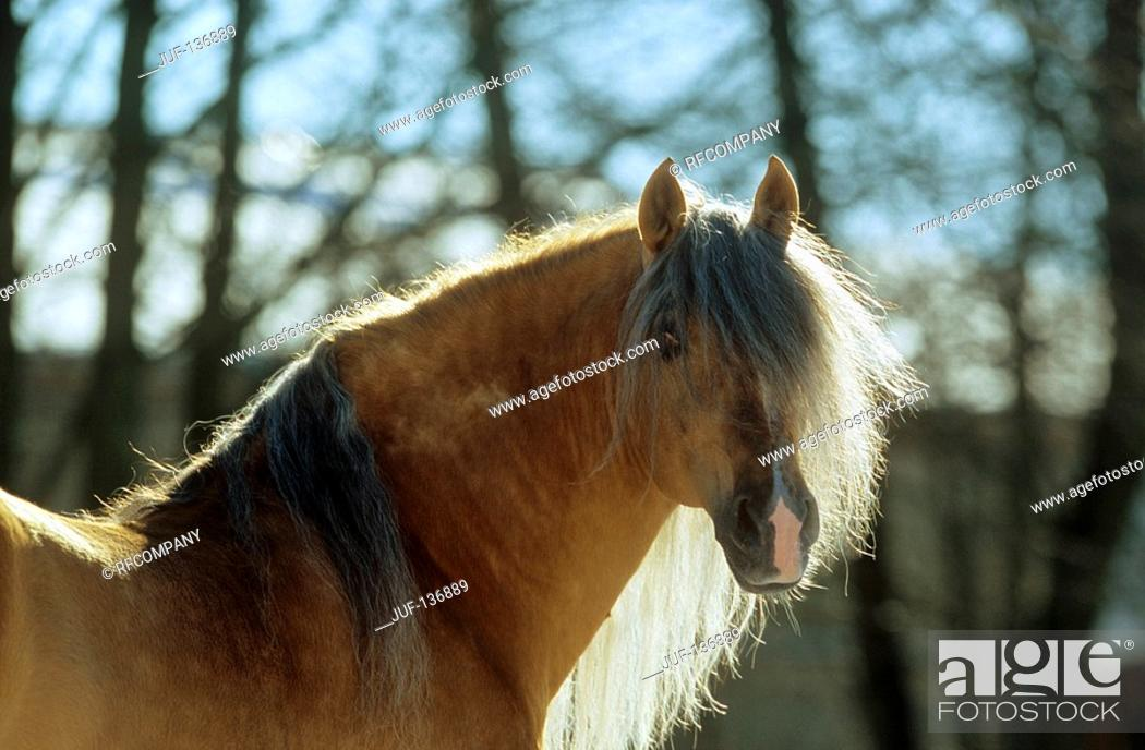 Stock Photo: Andalusian horse - portrait.