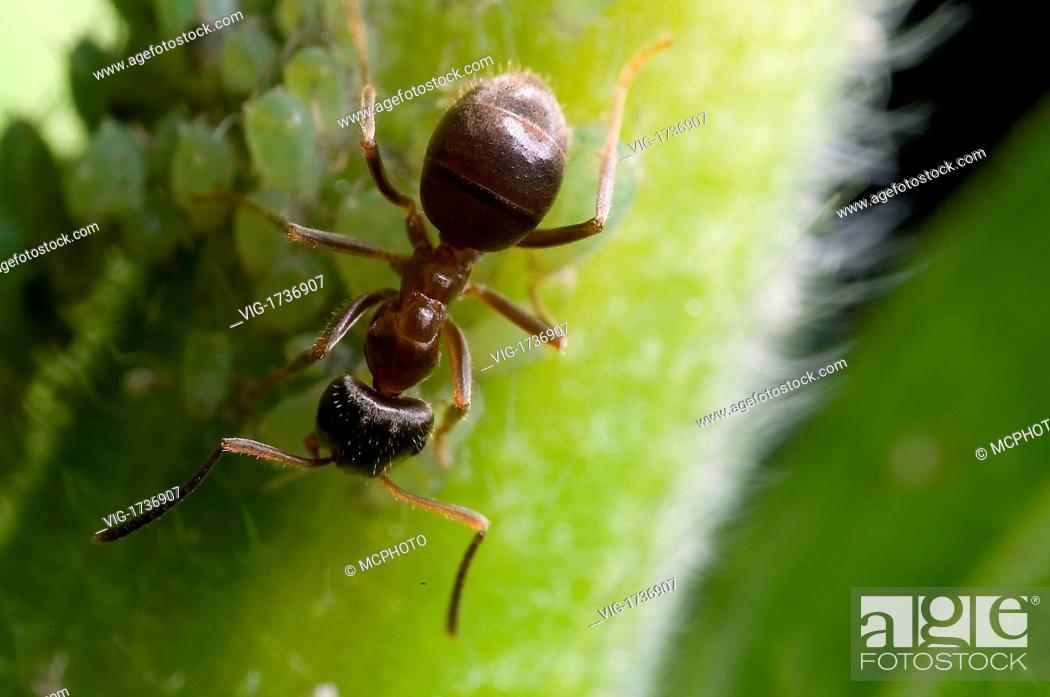 Stock Photo: Ants - 15/06/2008.