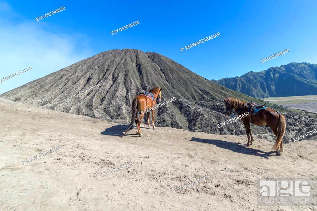 Stock Photo: The horse at Mount Bromo volcano, the magnificent view of Mt. Bromo located in Bromo Tengger Semeru National Park, East Java, Indonesia.