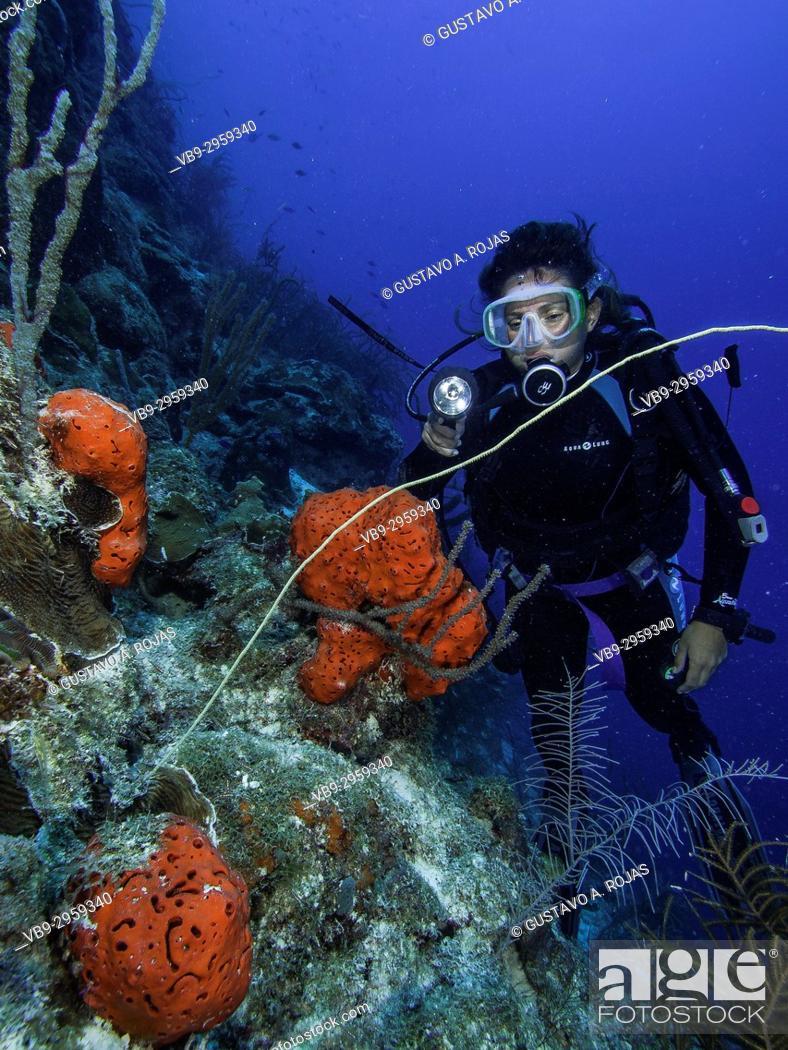 Stock Photo: Caribbean Sea Los Roques, , Scuba-Diver Tour, Underwater, Venezuela, Sponge.