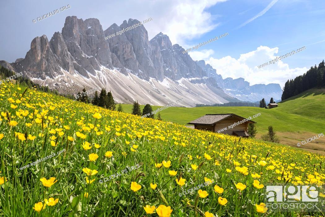 Stock Photo: Gampenwiese, Gampen Alm, Val di Funes - Villnoesser Tal, Suedtirol - Alto Adige - South Tyrol, Italy, Europe.