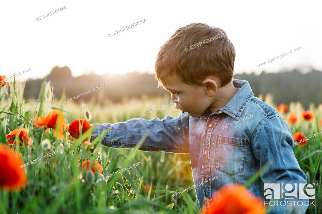 Photo de stock: Boy in a poppy field in spring.