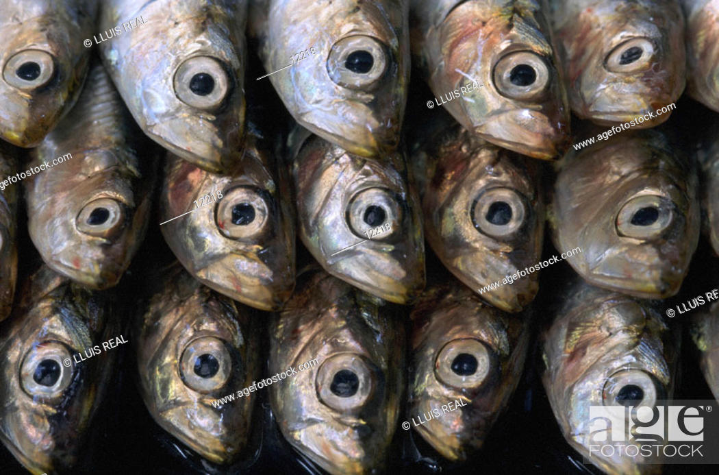 Stock Photo: Sardines.