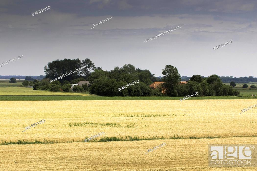 Stock Photo: DEU, WESTERMARSCH, 11.07.2015, Getreideanbau in Ostfriesland / grain production in northern many - Westermarsch, Germany, 11/07/2015.