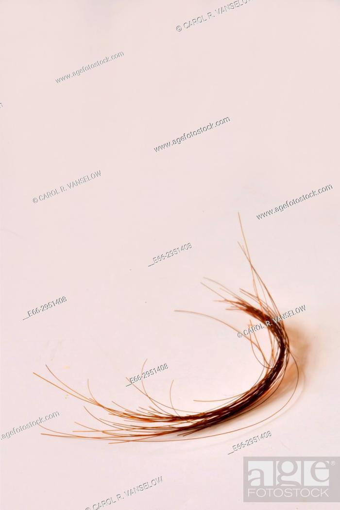 Stock Photo: strand of medium brown hair.