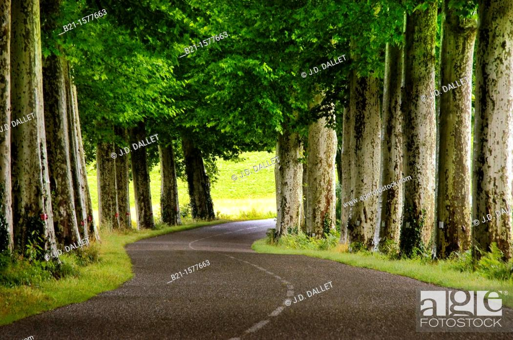 Stock Photo: Pilgrimage way to Santiago de Compostela: between Nogaro and Aire sur Adour, Gers, Midi-Pyrenees, France.