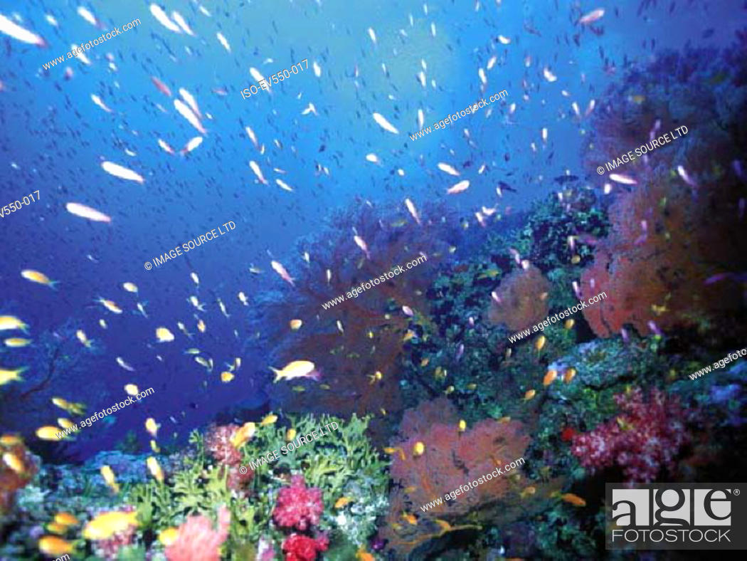 Stock Photo: Tropical fish.