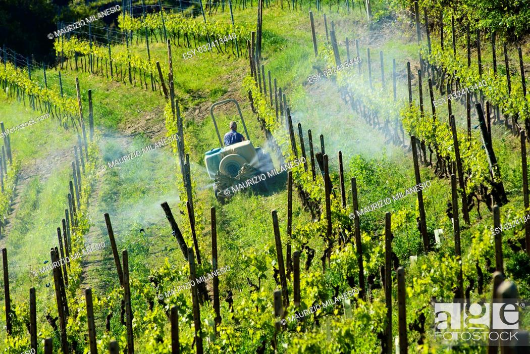 Stock Photo: Farmer with tractor between vineyards for the chemical treatment of grapes.