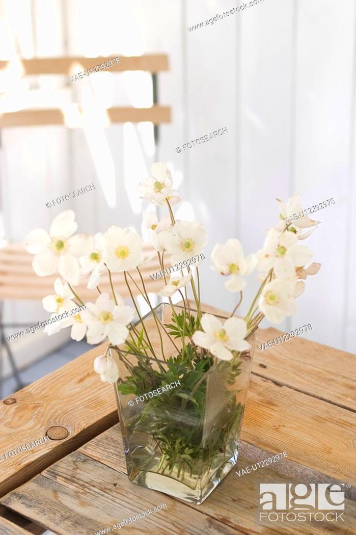 Stock Photo: Flower, Flower Vase, Indoors.