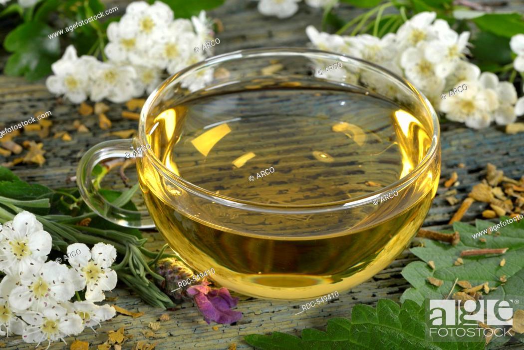 Stock Photo: Cardiovascular tea, Mistletoe, valerian, common lavender, hawthorn herb, nettle, hibiscus / (Viscum album), (Crataegus monogyna), (Common valerian).