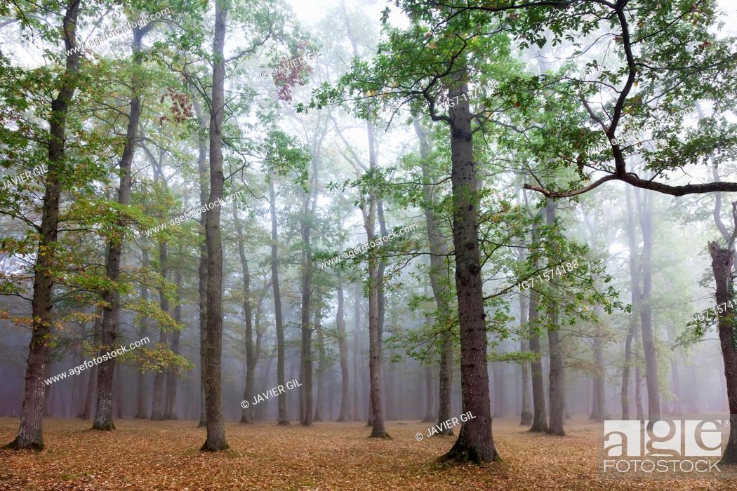 Photo de stock: Forest in Legutiano, Alava, Spain.