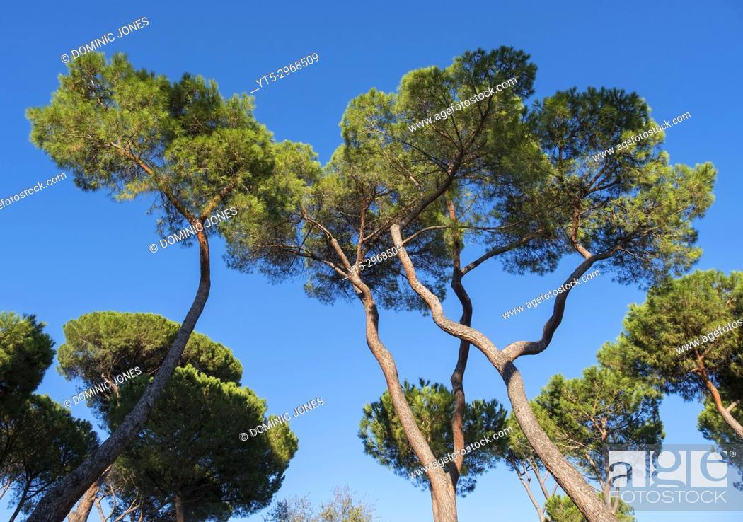 Stock Photo: Trees in Villa Borghese gardens, Rome, Italy, Europe.