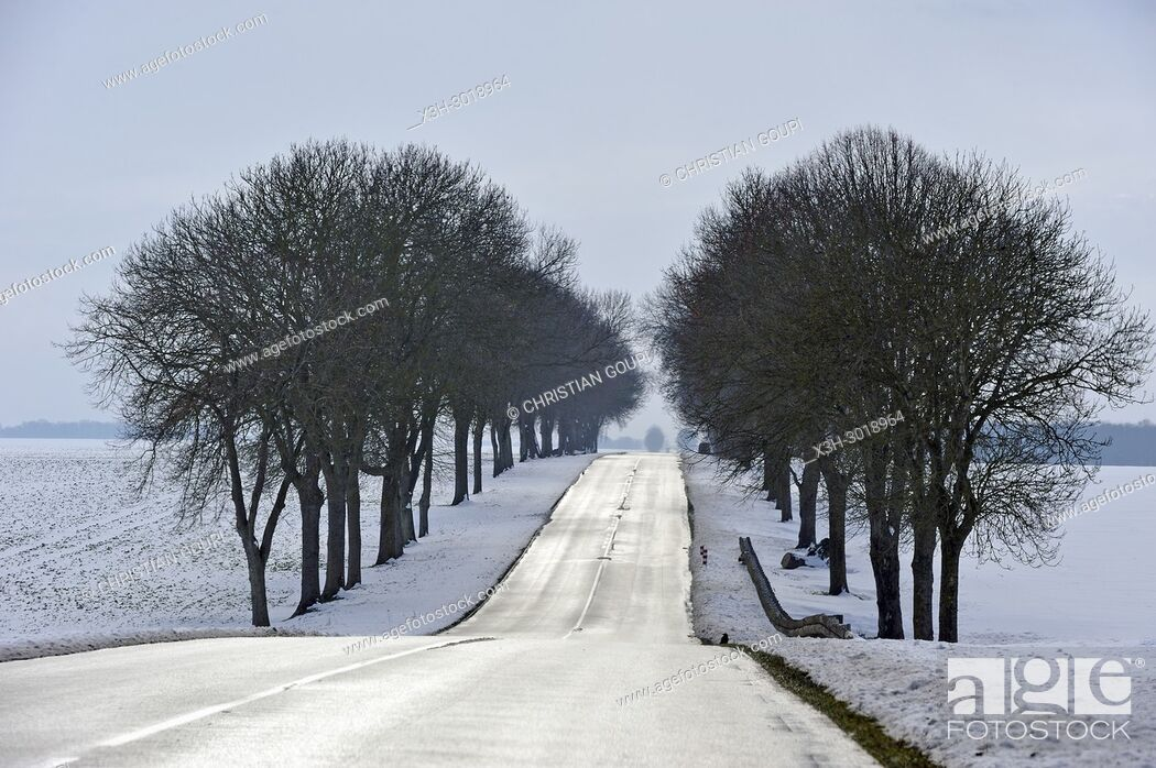 Stock Photo: tree-lined country road through the Beauce region covered with snow, department of Eure-et-Loir, Centre-Val-de-Loire region, France, Europe.