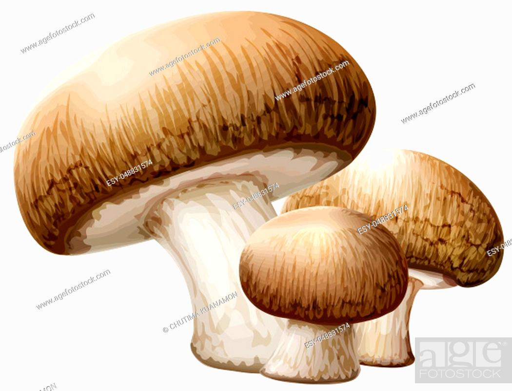 Stock Photo: cremini mushrooms brown nature food fungus illustration.