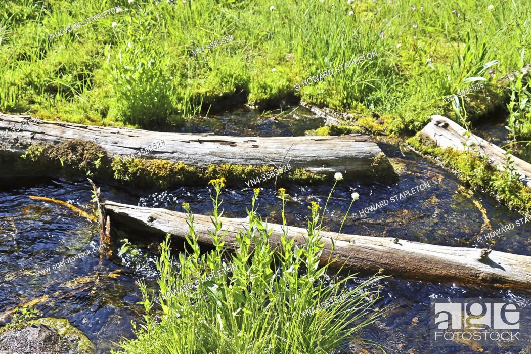 Stock Photo: A snow and spring fed stream along the Castle Crest Wildflower Trail in Crater Lake National Park. Oregon, U. S. A.