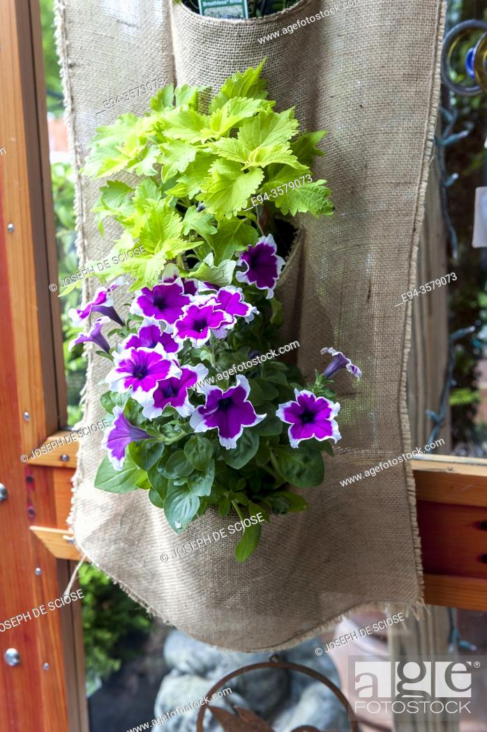 Photo de stock: A simple fabric basket hung on a door holdint two small plants.