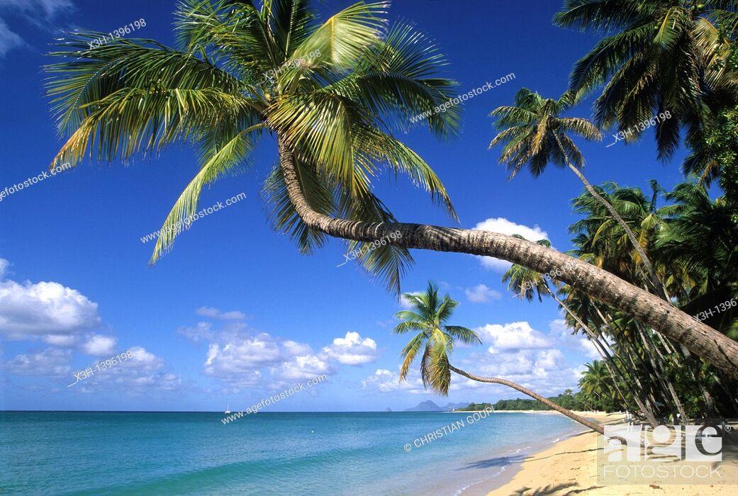 Stock Photo: plage de la Grande Anse des Salines, Sainte-Anne Ile de la Martinique Departement et Region d'Outremer francais Archipel des Antilles Caraibes//beach of Grande.