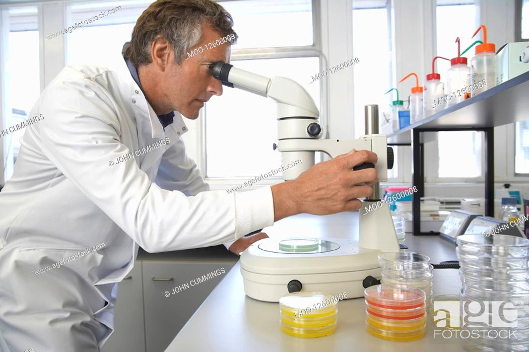 Stock Photo: Male lab worker adjusting microscope to examine petri dish.
