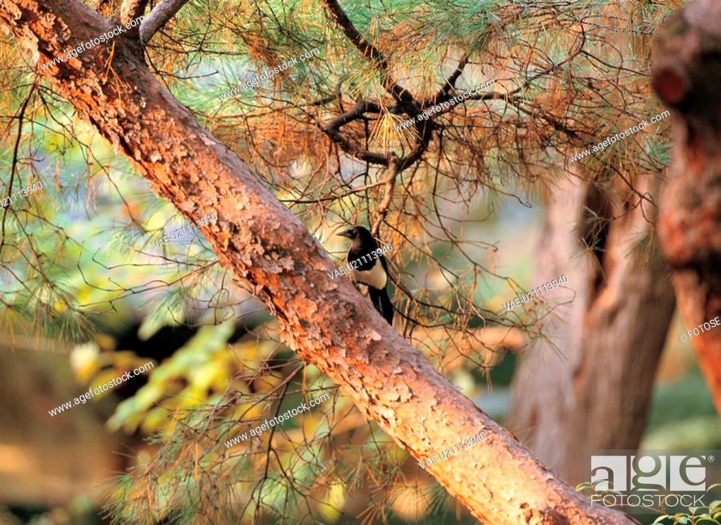 Stock Photo: nature, vertebrate, animal, scenery, film.