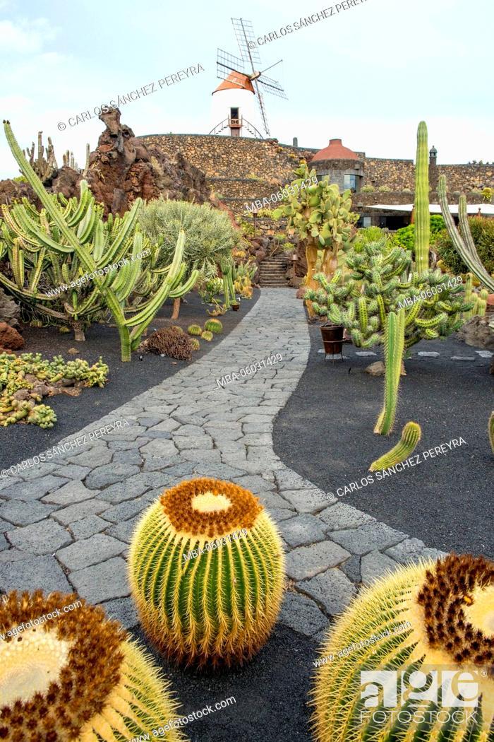 Stock Photo: Cactus garden ( Jardin de cactus) designed by Cesar Manrique, Lanzarote, Canary Islands, Spain.