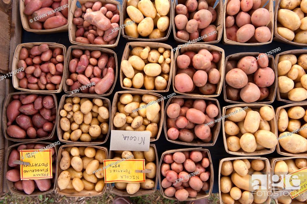 Stock Photo: potatoes at farmers market.