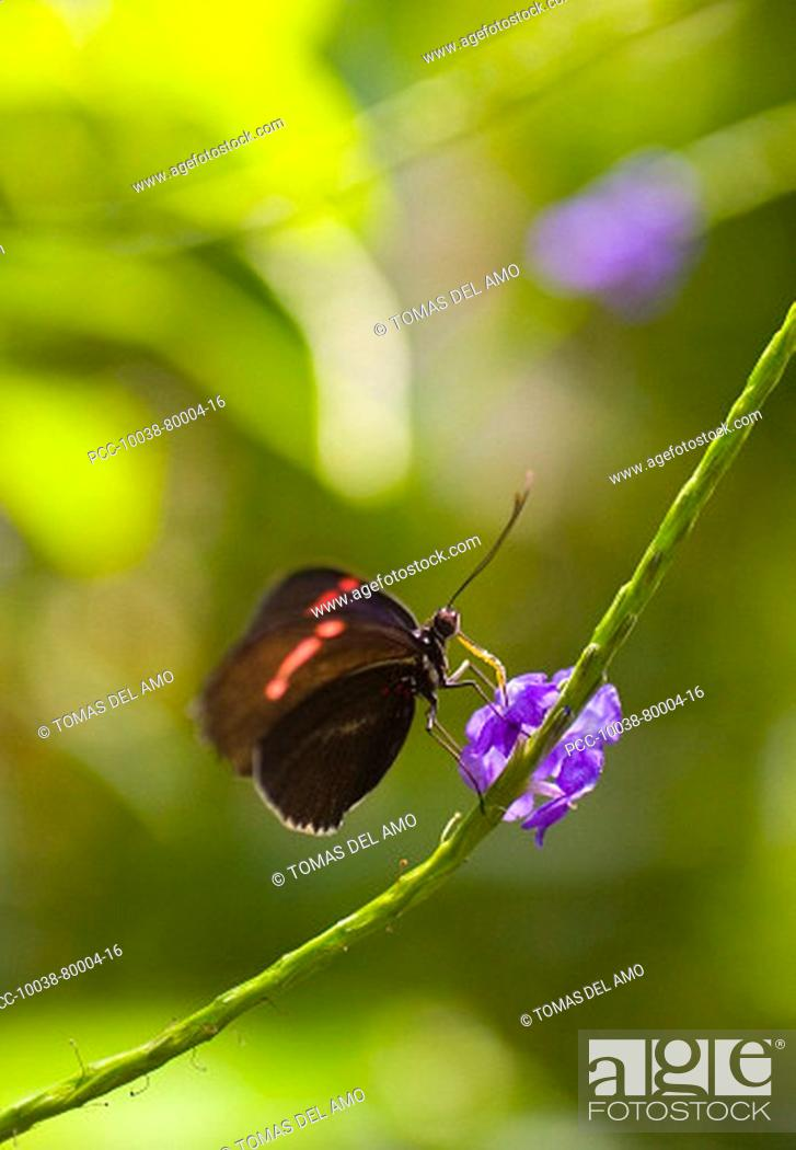 Stock Photo: A beautiful brown and red butterfly rests upon a bright purple flower.