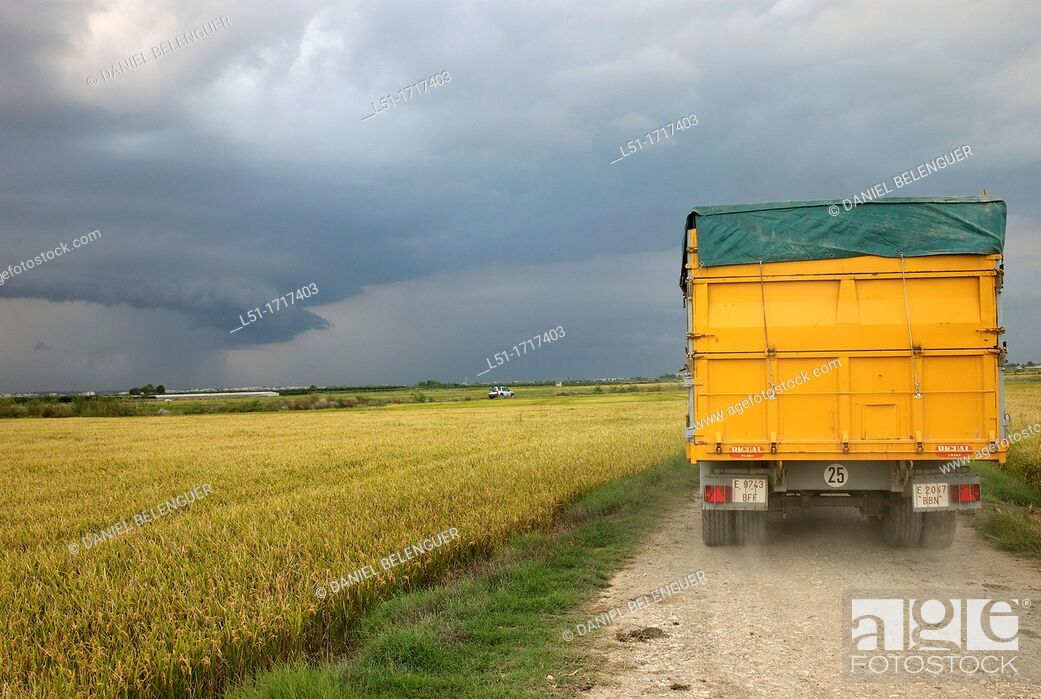 Stock Photo: track between the rice fields near Sueca, Albufera de Valencia Nature Reserve , Valencia, Spain.