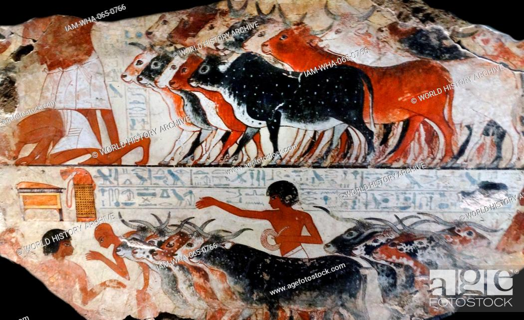 Stock Photo: Fresco from the tomb of Nebamun, Fragment of a polychrome tomb-painting showing cattle with their farmers from the presentation of the geese scene.