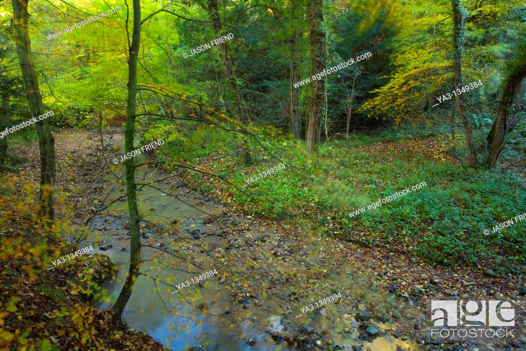 Stock Photo: England, County Durham, Castle Eden Dene  Autumn colours in the Castle Eden Dene woodland National Nature Reserve NNR.